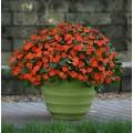 Beacon Orange