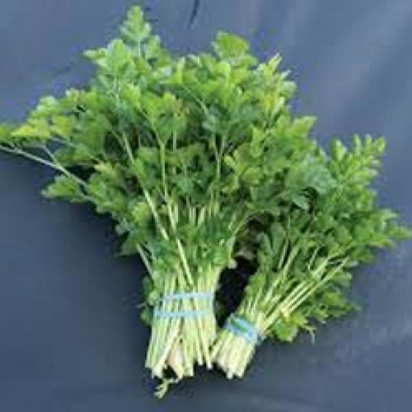 Summer Celery